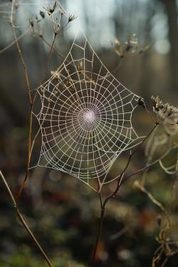 Spider Web Network